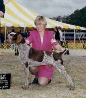 German Shorthaired Pointer at Show